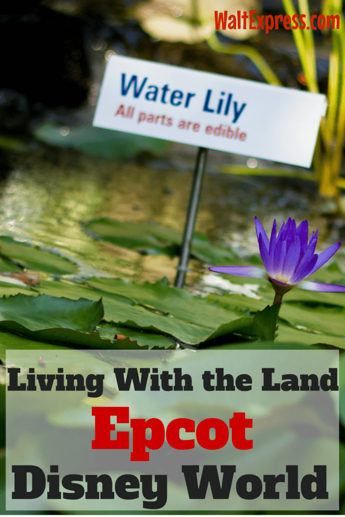 living-with-the-land-epcot-disney-world
